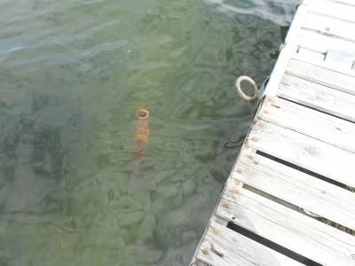 Det här grova järnröret står ganska osynligt under vattnet och utgör en allvarlig fara för badande.